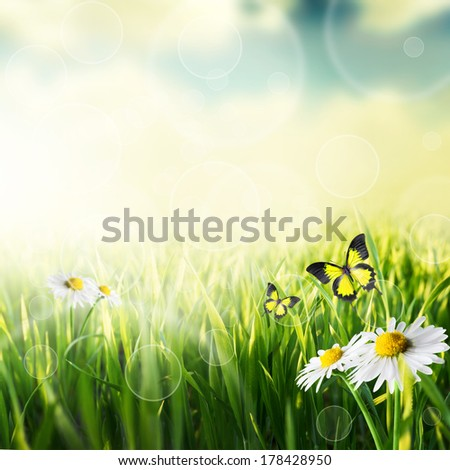 Green grass and flower with butterfly natural background with selective focus - stock photo