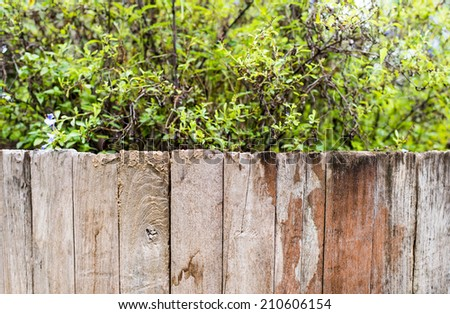 green grass and leaf plant over wood fence - stock photo