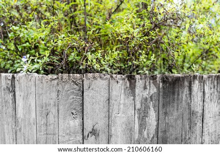 green grass and leaf plant over wood fence