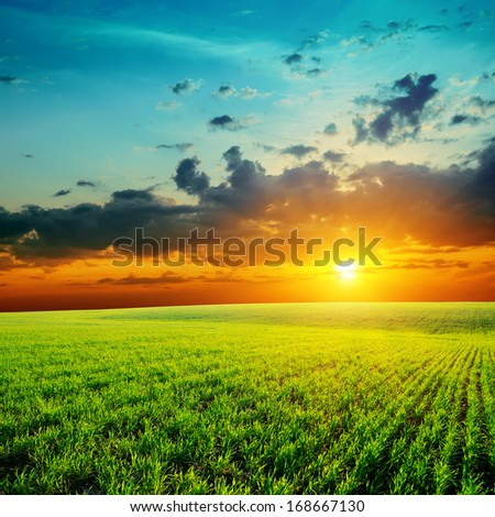 green grass and low orange sunset