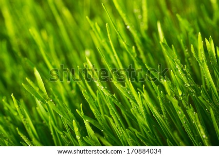 Green grass and morning dew. Shallow DOF - stock photo