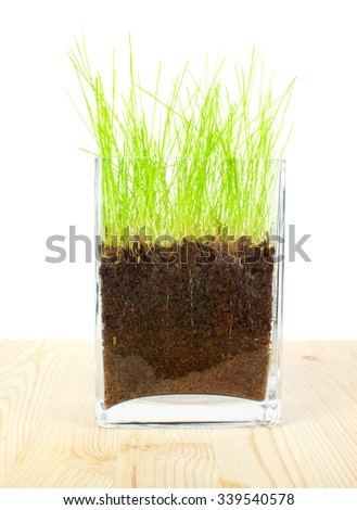 Green grass and roots on wooden  background  - stock photo