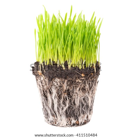 Green grass and soil from a pot with plant roots isolated on white background - stock photo