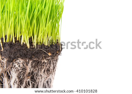 Green grass and soil from a pot with plant roots isolated on white background. Macro shot with copyspace - stock photo