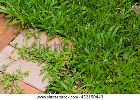 green grass and wood plate background