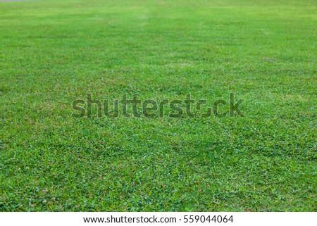 green grass at the park