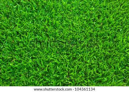 grass background. green grass background