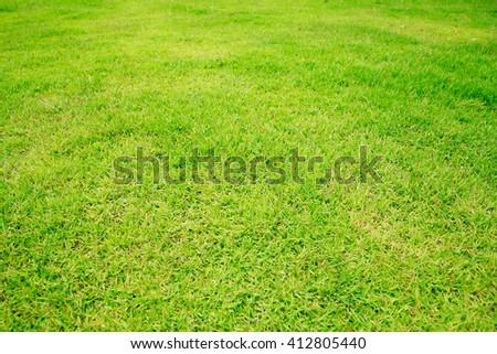 Green grass background. - stock photo