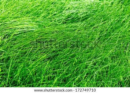 Green grass background after rain - stock photo