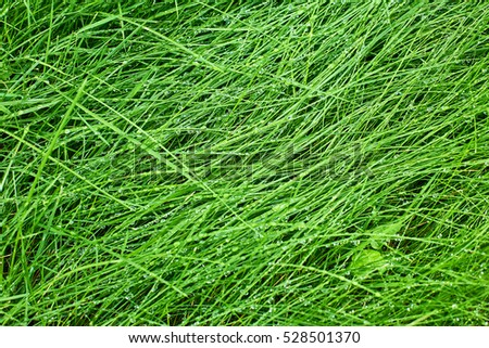 Green grass background after rain