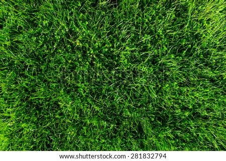 green grass background from above - stock photo