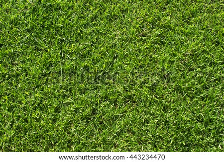 Green grass background, Green grass soccer field background, Close-up image of fresh spring green grass - stock photo