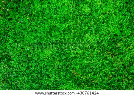 Green grass background, Green lawn object
