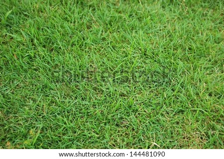 Green Grass background image