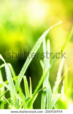 Green grass background macro. Abstract natural backgrounds with beauty bokeh. - stock photo