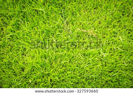 Green grass background texture. Close-up image of fresh spring green grass - stock photo