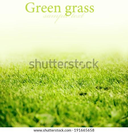 Green grass background texture. Element of design.  - stock photo