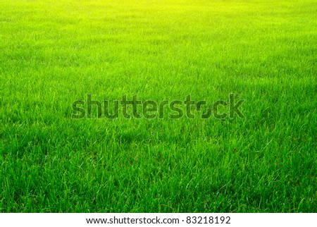 Green grass background texture. Element of design. - stock photo