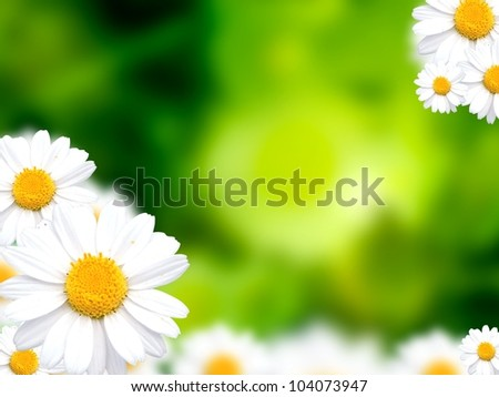 Green grass background with daisy flowers illustration