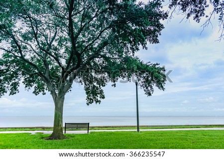 Green grass,big tree and bench on the blue sky background