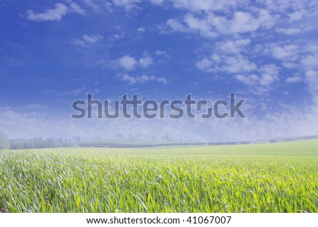 Green grass, blue sky and white fluffy clouds - stock photo