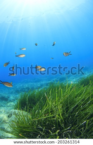 Green Grass Blue Water Tropical Fish - stock photo