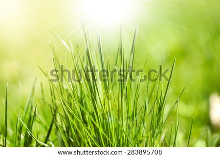 Green grass, close up