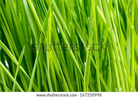 Green Grass Close Up Details - stock photo