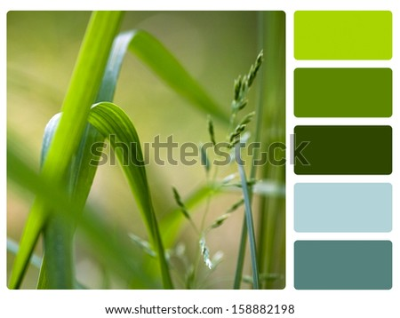 Green grass color palette with complimentary swatches. - stock photo