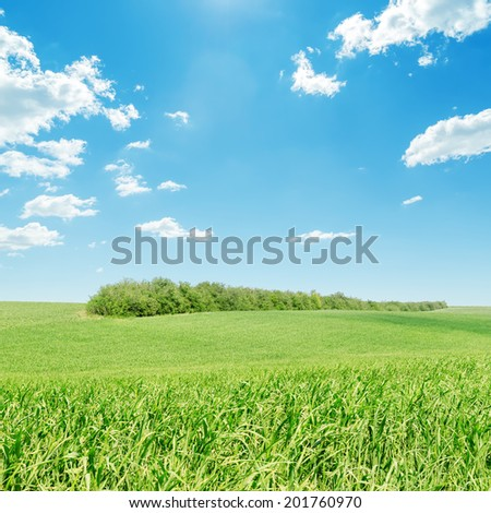 green grass field and blue sky - stock photo
