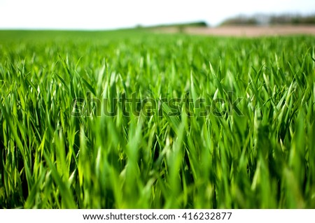 green grass field and bright sky