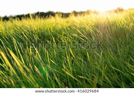 green grass field and sunlight macro photo - stock photo