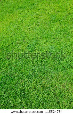 green grass field use as nature background - stock photo