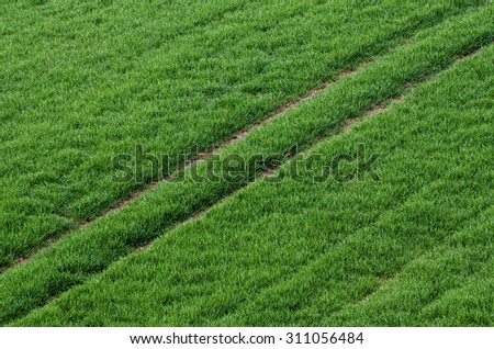 Green grass field with track  suitable for backgrounds or wallpapers, natural seasonal landscape. Southern Moravia, Czech republic - stock photo