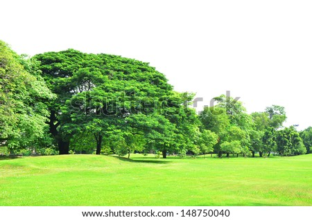 Green Grass Field with Tree and Isolated Sky Background - stock photo