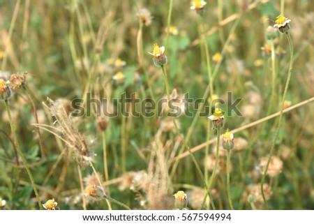 Green Grass Flowers Background