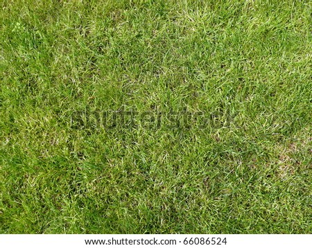 green grass for background, daily time - stock photo