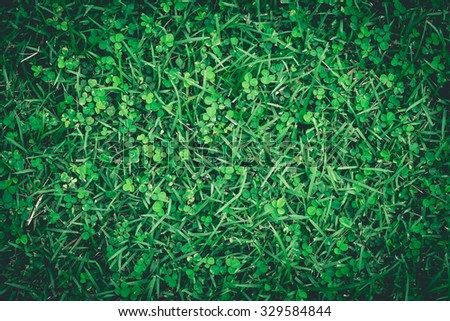Green grass for texture/background.