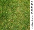Green grass fragment as a background texture - stock photo
