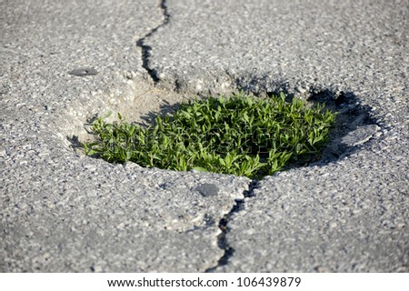 Green grass growing from the Asphalt, broken from the force of Nature