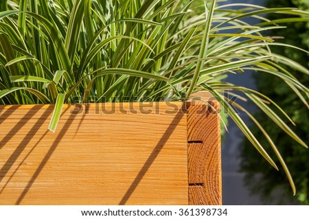 Green grass growing in the wooden box - stock photo
