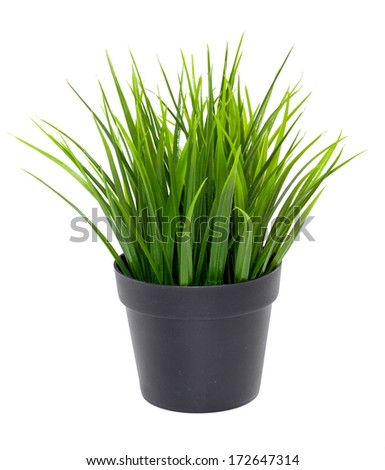 Green grass in a black flower pot isolated on white background