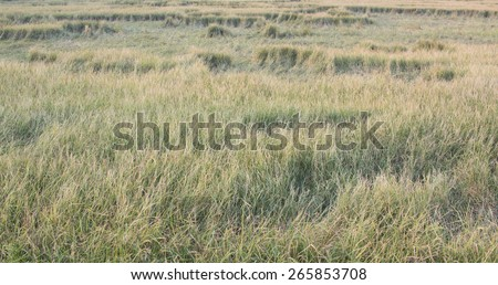 Green grass in a field background - vintage - stock photo