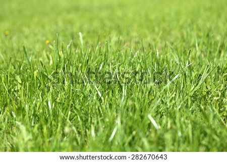 Green grass in a field photographed close up