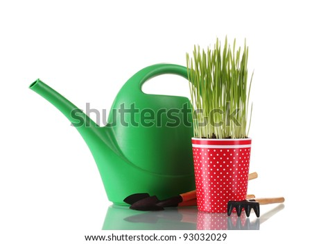 Green grass in a flowerpot isolated on white - stock photo