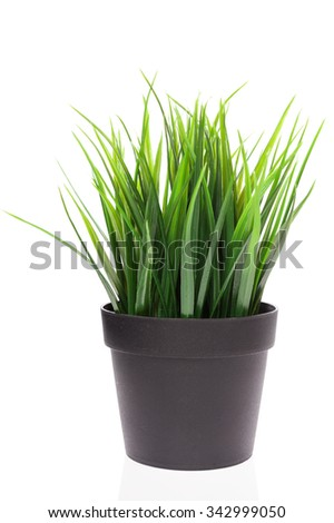 Green grass in black vase isolated on white background