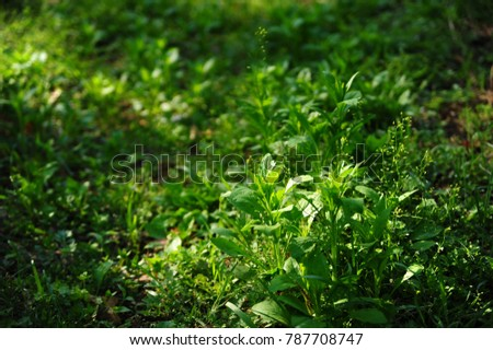 green grass in early spring