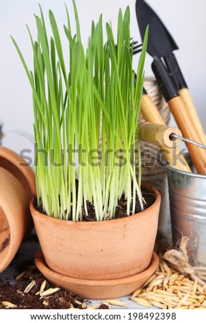 Green grass in flowerpots and gardening tools, on wooden table - stock photo