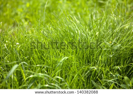 green grass in lawn background - stock photo