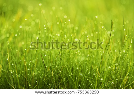 summer outdoor backgrounds. Green Grass In Morning Dew, Beautiful Summer Outdoor Background Backgrounds E